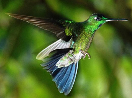 San Jorge de Tandayapa ecuador Hummingbird Sanctuary bird watching